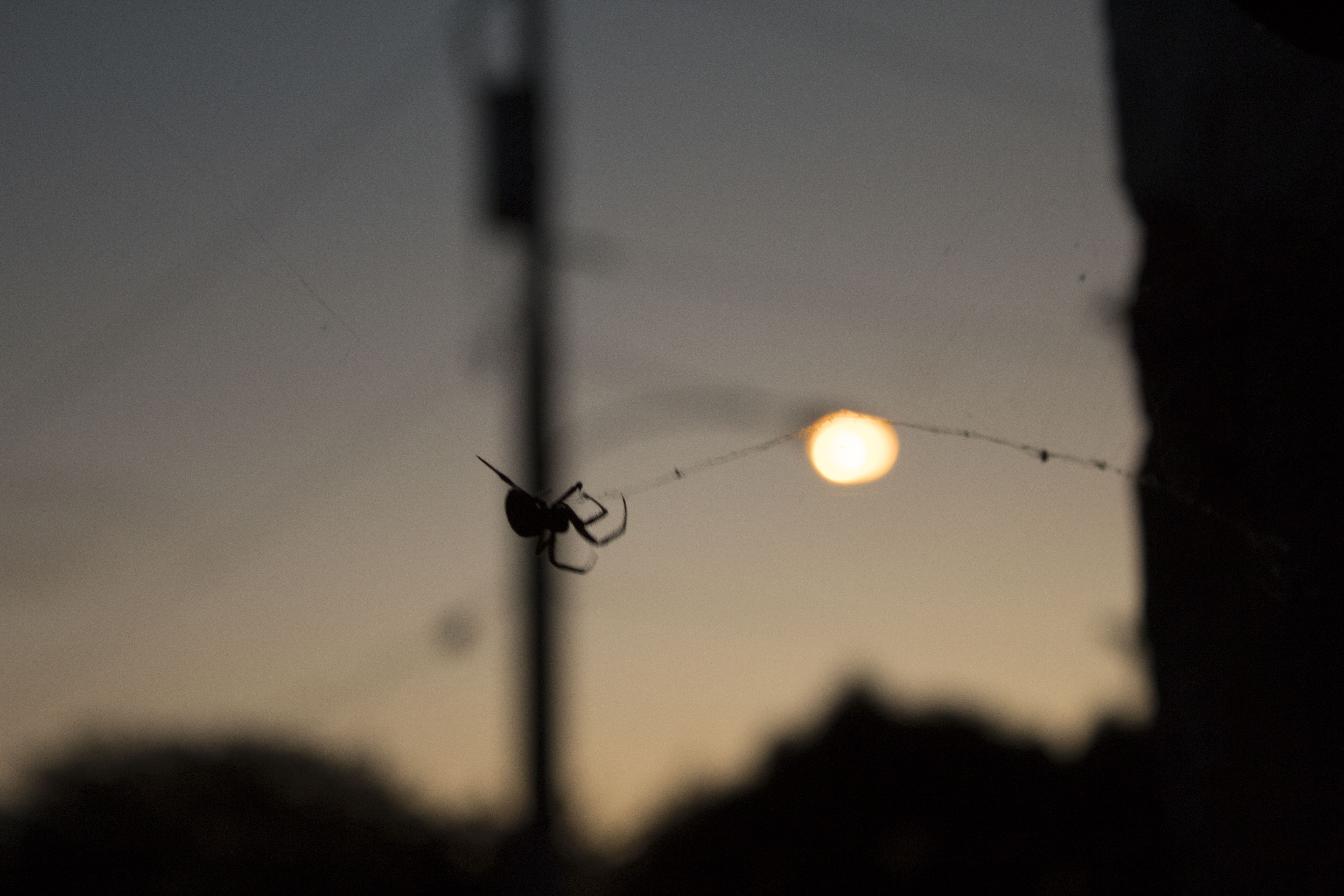 silhouette of spider, streetlamp in background