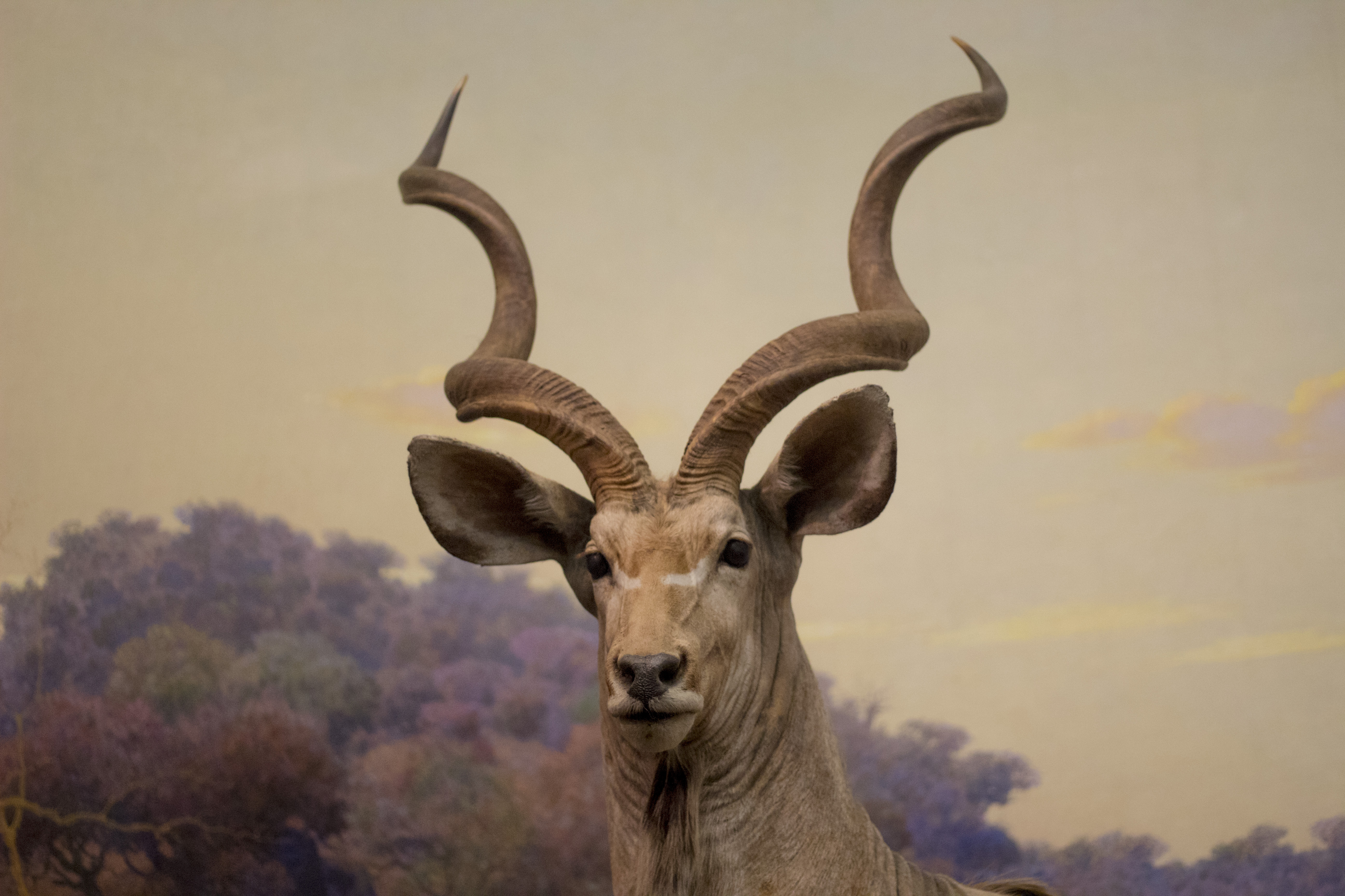 head of animal with horns
